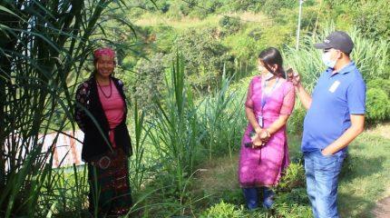 घाँस खेतीबाट आम्दानी गर्न थालेपछि महिलाहरु उत्साहित